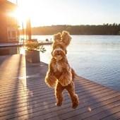 [ HAPPY MONDAY ]☀️Plein de good vibes 🤟🏻  #lundi #monday #goovibes #creditphoto #pinterest